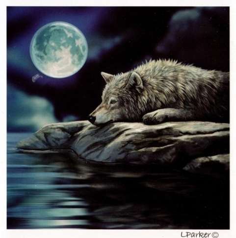 Quiet Reflections Wolf Greetings Card
